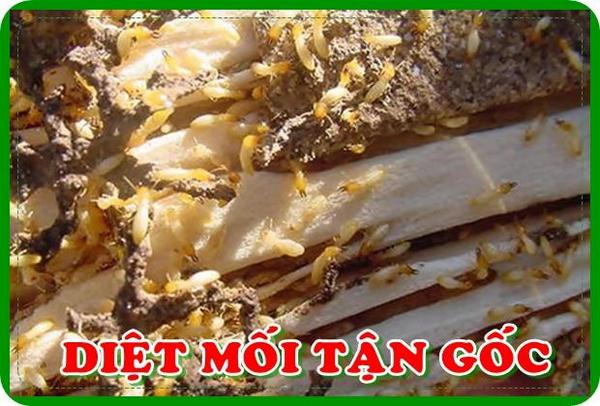 diet-moi-tan-goc-tai-ha-noi