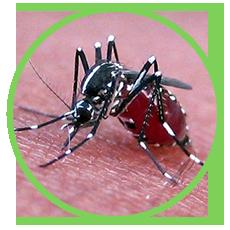 Dịch Vụ Phun Thuốc Diệt Muỗi Tại Nhà, Phun Xịt Thuốc Diệt Muỗi Y Tế Tại Hà Nội, TPHCM
