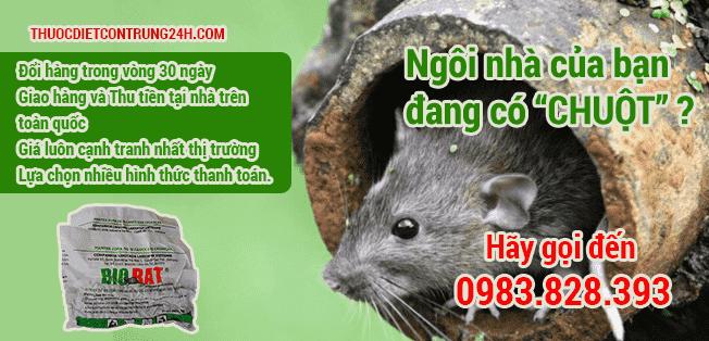 Thuốc diệt chuột quận Đống Đa Hà Nội