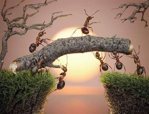 Bí ẩn loài kiến và cách diệt kiến tận gốc