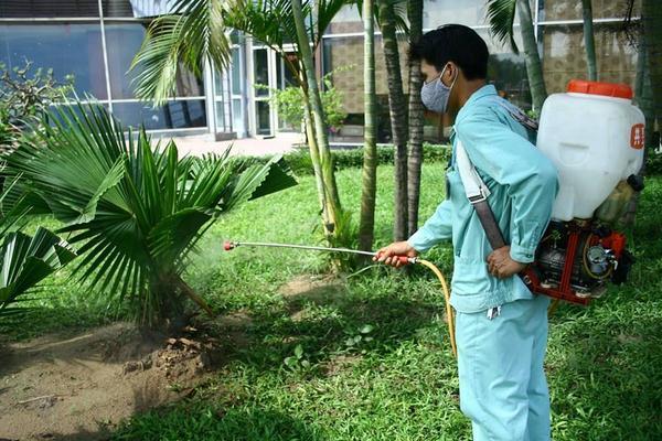 [ Dịch vụ phun diệt bọ xít, diệt sâu cây] trị các loại Sâu cây cảnh, Sâu Róm, Sâu Bọ..