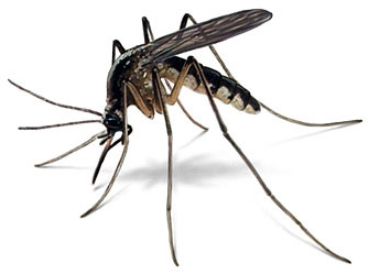 Đập chết 4 triệu con muỗi/tháng