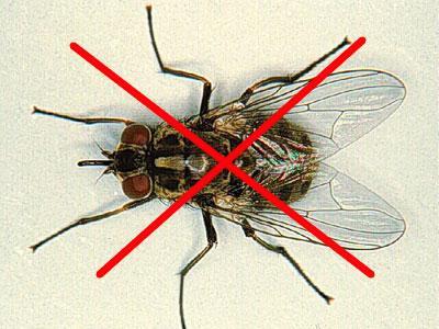 thuốc diệt ruồi tốt nhất tại Hà Nội