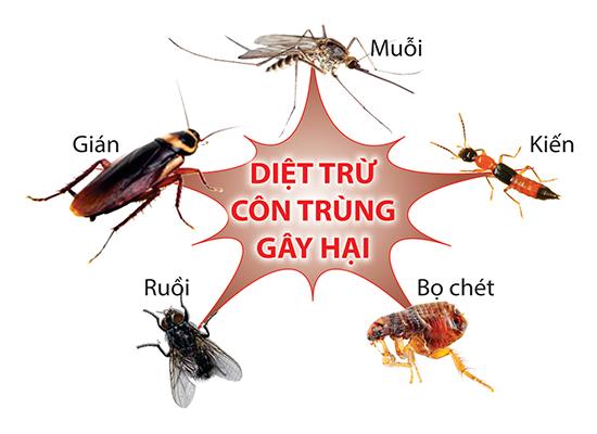 Bán thuốc diệt côn trùng giá rẻ tại Hà Nội